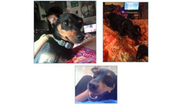 Dog stolen from Central PA home