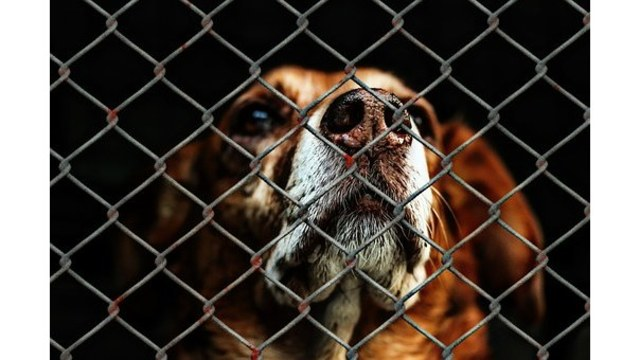 Animal shelter issues warning