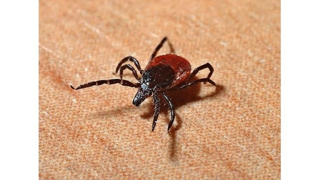Lyme disease expected to increase