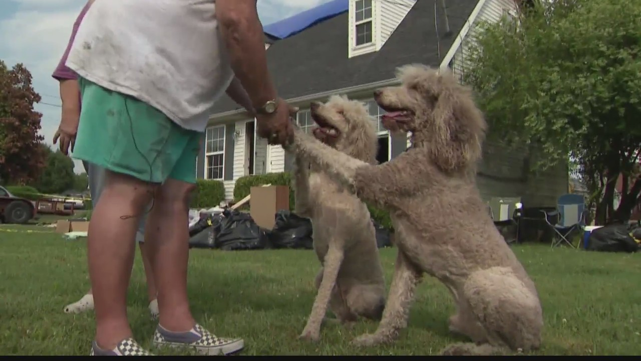Poodles save owners lives during house fire